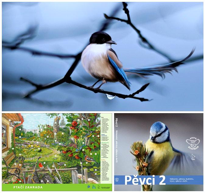 birdsbirds