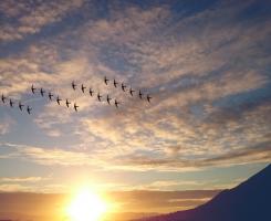 Máme Pro Vás Originální Ptačí Dárky